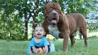 大型犬と赤ちゃんの触れ合い