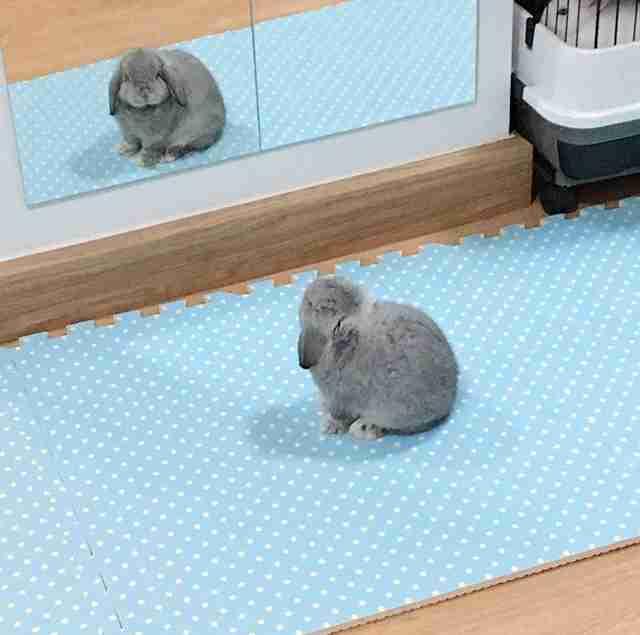 ウサギ達の熱くかわいい戦い「 #ピョンちゃんオリンピック 」が開幕