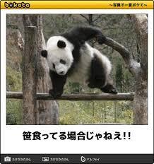 パンダのシャンシャン先着順公開、初日は6,000人 整理券余る 上野動物園