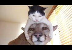 微笑ましい動物画像に、笑えるセリフをつけてみる!