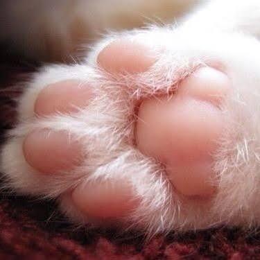 猫に靴下をはかせた動画に「虐待」と批判 獣医の見解は