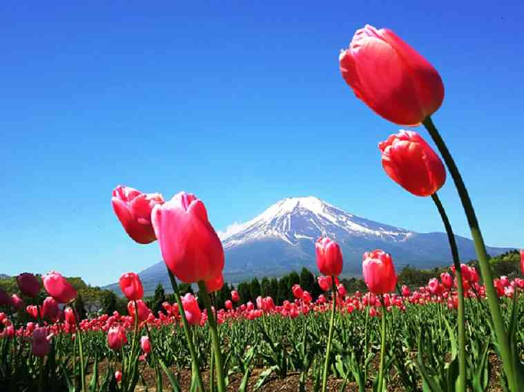 春を感じる画像を貼りましょう!