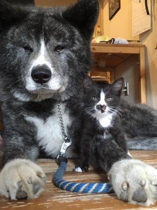 違う種類の動物が仲良くしている画像がみたい