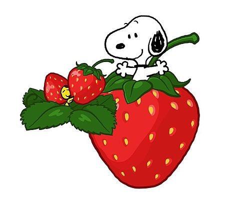 苺の画像を集めるトピ。