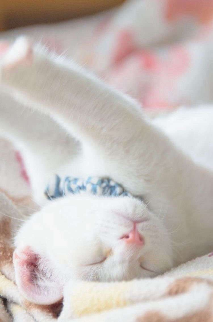 白猫画像トピ
