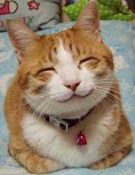 好きな(飼っている)猫の種類は何ですか?