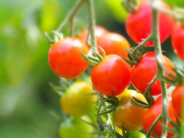 【園芸】今から植える野菜、花の種