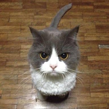 気性の激しい猫をあずかるとき気を付けてあげなければいけないことを教えてください
