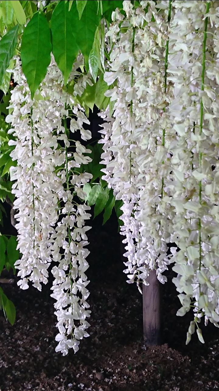 【画像トピ】春です!とにかくお花畑でGO!