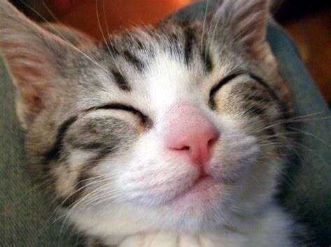 【猫飼ってる方】ソファーはどんな状態ですか?
