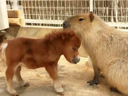 小動物癒しトピ