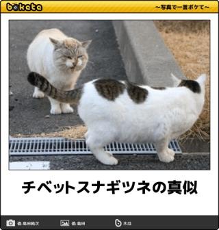 動物たちの変顔選手権~春~