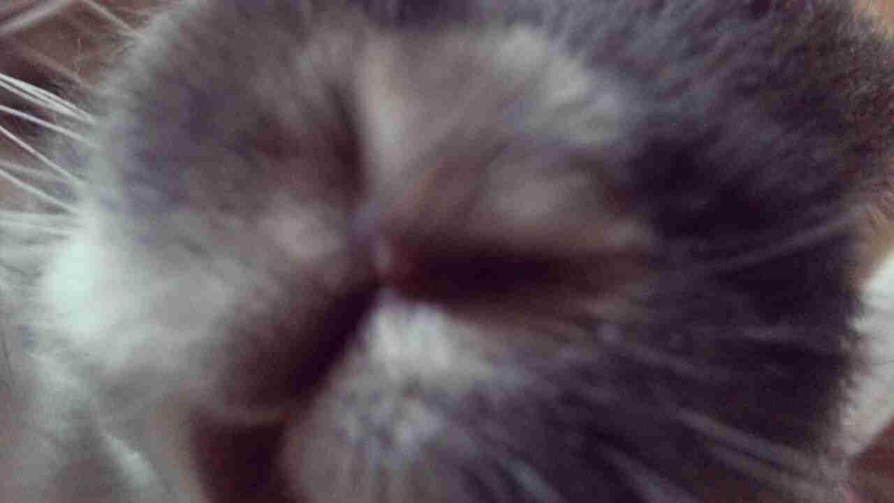 ペットの写真の撮り方を教えてください