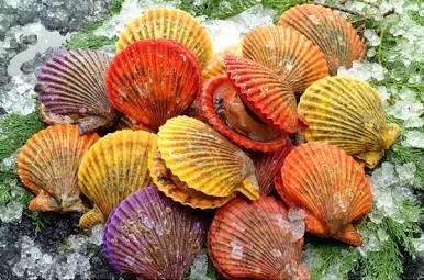 貝好き集まれ