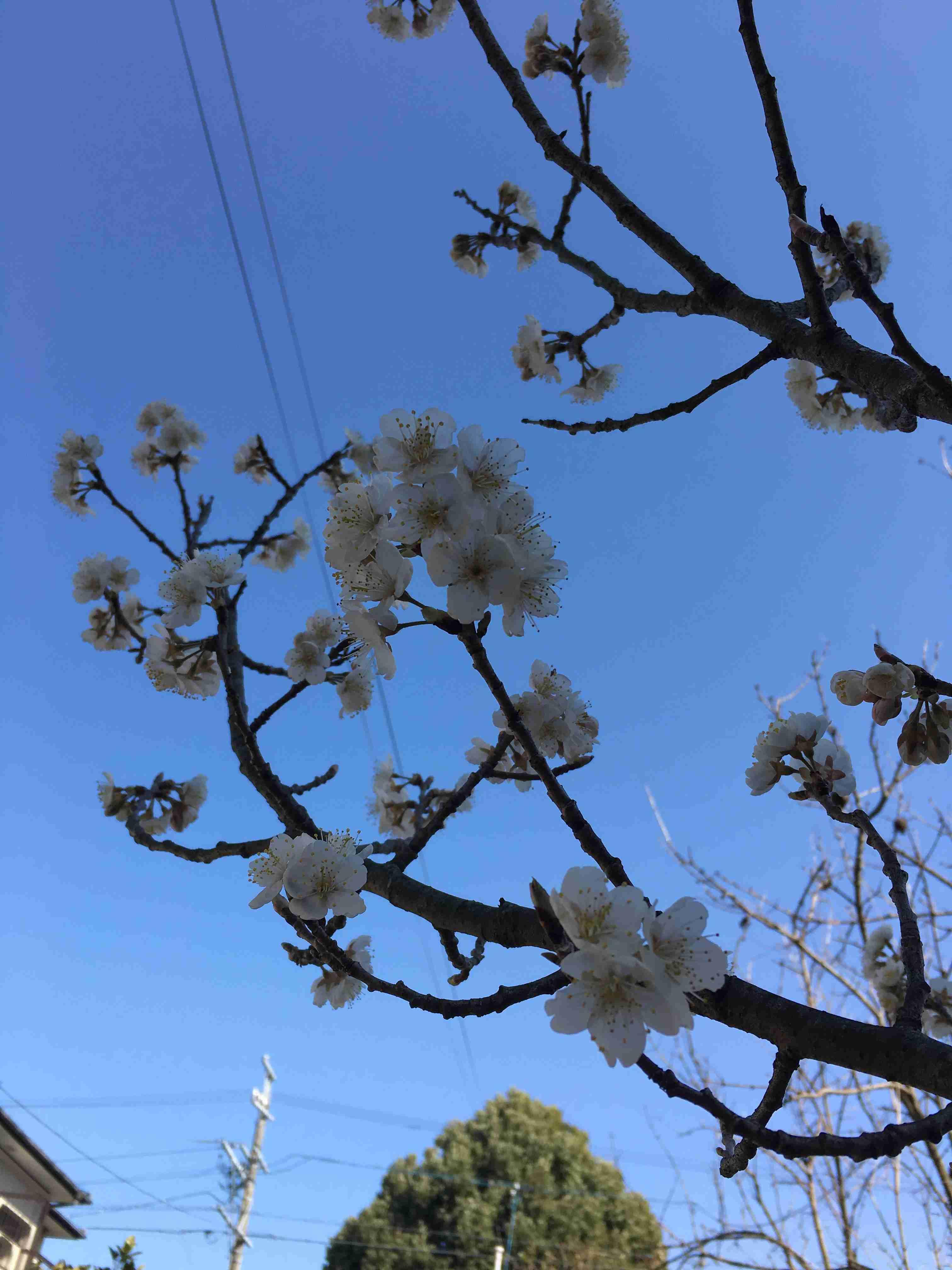 春、見つけました?