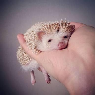 動物の癒し画像を貼っていく(◦ˉ ˘ ˉ◦)