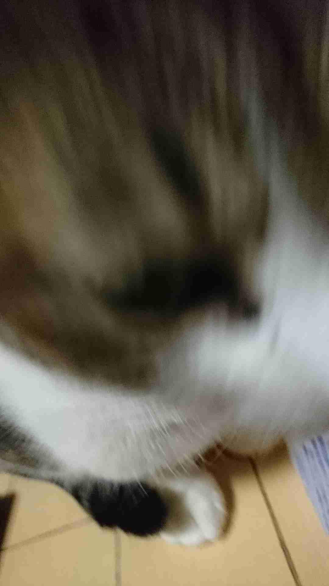 ペットの残念な画像