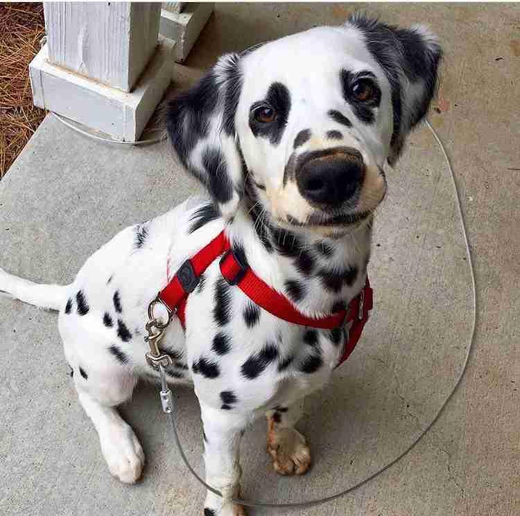 好きな犬種は何ですか?