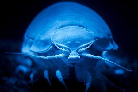 【閲覧注意】深海を語るトピ。