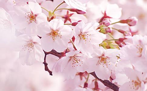 「春が来れば思い出す♪」の後になにか思い出して歌ってください
