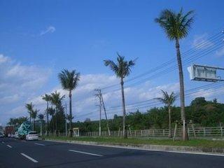 沖縄県あるある