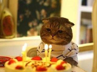 誕生日嫌いな人〜