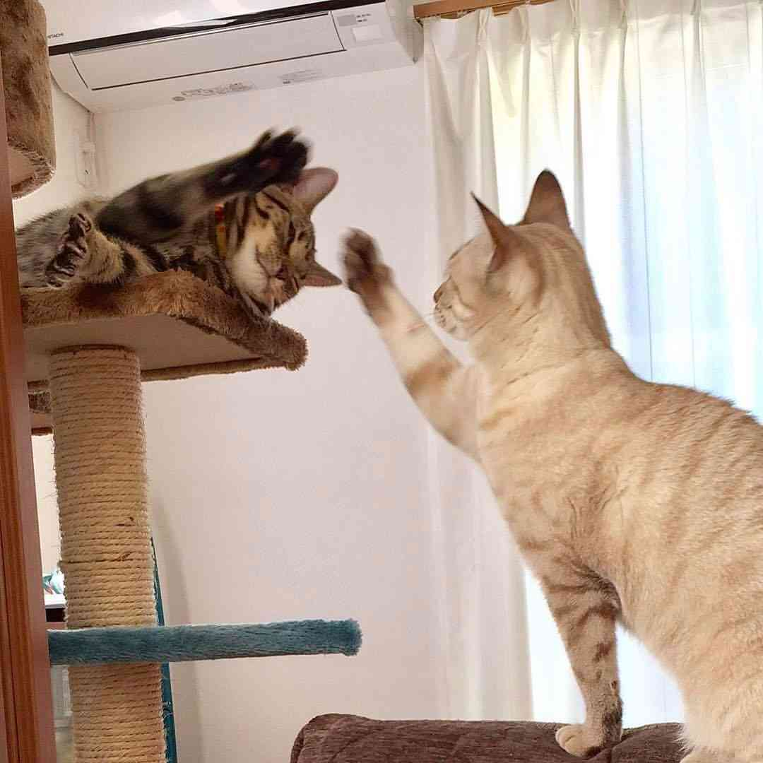 ガルちゃん猫カフェ25号店 開店しました♪ (初めての方も大歓迎!)
