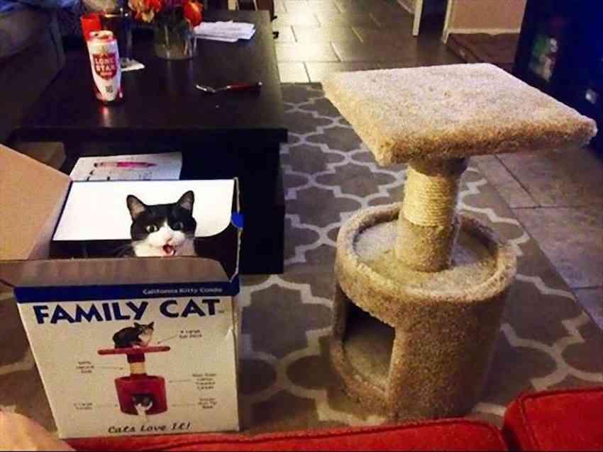 """愛猫を「フトンヘコマシ」と呼ぶ父が書いた""""研究レポート""""が笑える"""