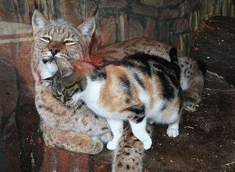 猫になったらやってみたい事