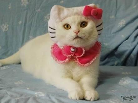 いろんなキティさんが見たい