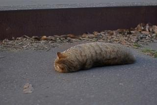 Twitterに投稿された一体ニャンだかわからない「謎の生物」の写真に反響