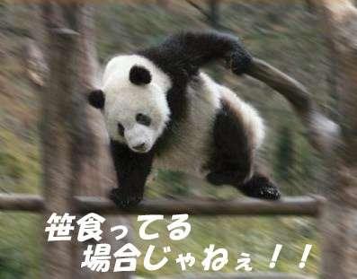 ダイエット中の人、逃げて!悪いことを言うパンダがかなりアカン