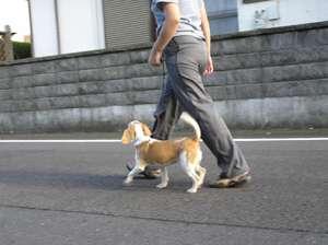 小型犬飛び出して転倒、飼い主側に1200万円賠償命令