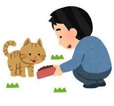 ノラ猫への餌付けに困っています。
