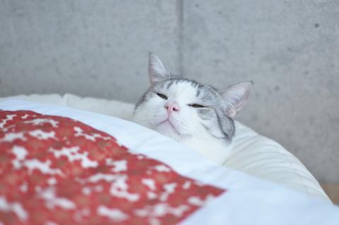起きてると眠くて、寝ようとすると眠れない人