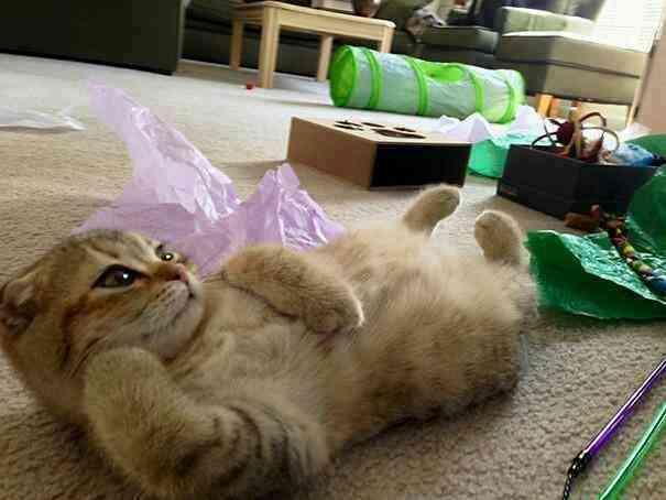 猫ちゃんの年齢と体重教えてください!