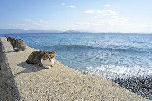海とかで黄昏るの好きな人!