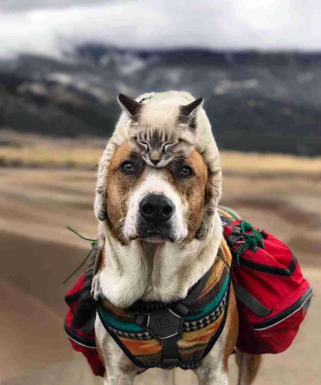 新ジャンル「頭に猫をかぶった犬」…とんでもなくかわいい写真いろいろ