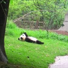 ストレスが溜ってる人はこの写真を見ると絶対リラックスできる(一部ヘビ苦手な人は注意)