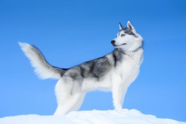 リードなしの大型犬かみつく、飼い主に約200万円の賠償命令