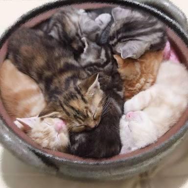 ひたすら猫鍋画像。