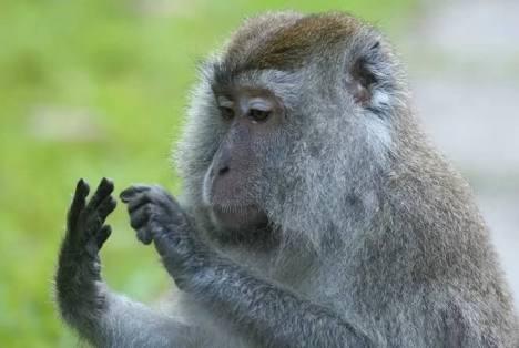ことわざや慣用句を、身をもって表現している動物達!
