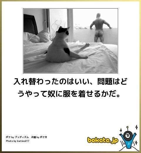 石田ゆり子、「こんな生活はいやだ」とこぼす愛猫との写真