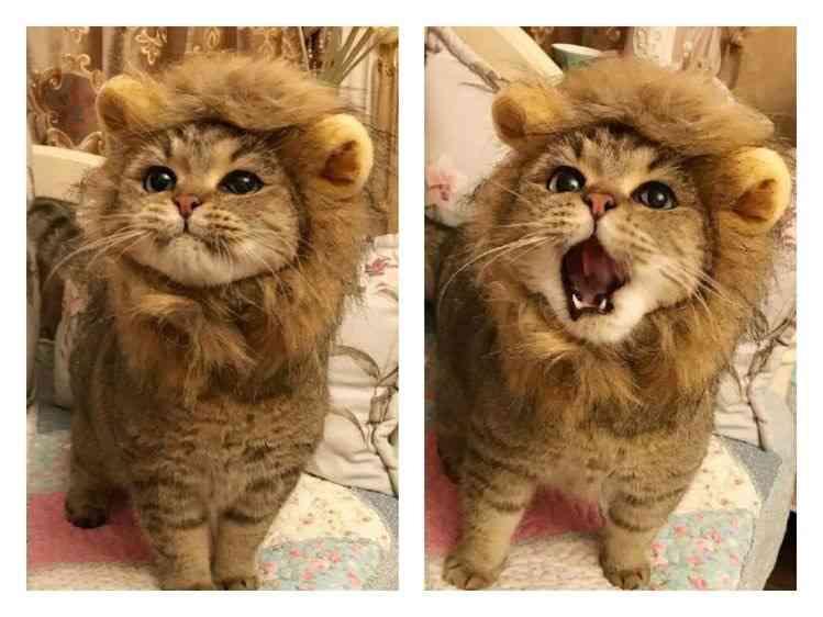 猫のマズルが好きな方!