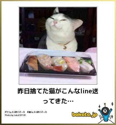 ドヤ顔の動物達【画像】