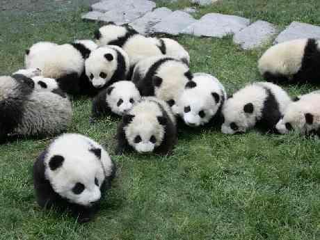 あったらいいな♪こんな動物園♪