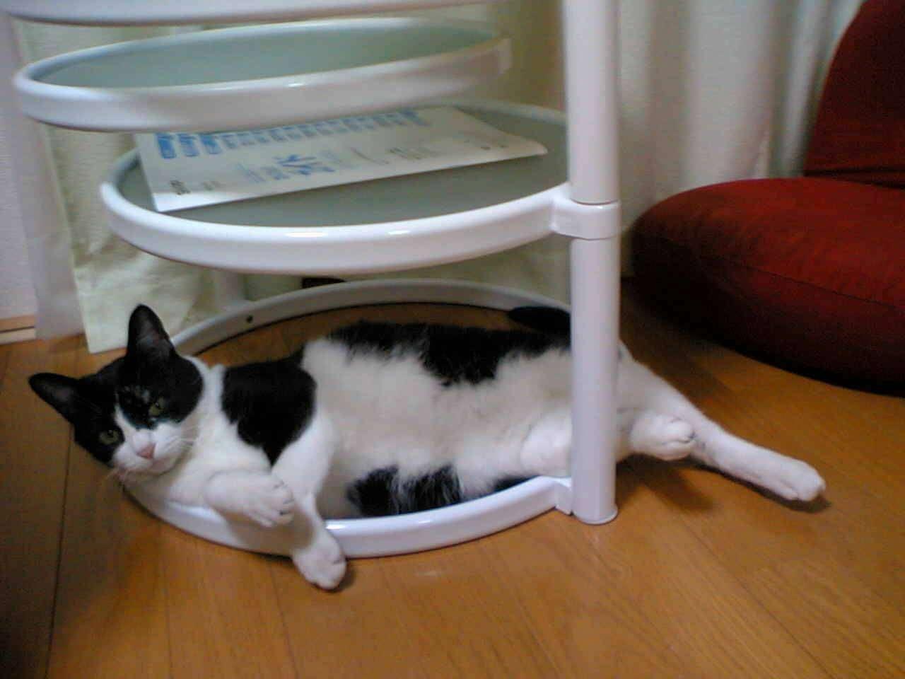 【画像】白黒猫