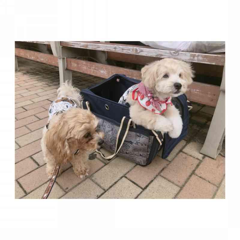 辻希美、愛犬クックのブログ頻発に「子犬のモカはどうしたの?」と疑問の声が殺到