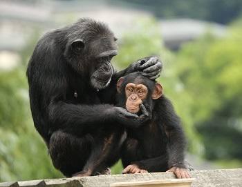 動物が好きすぎて動物園に行けないのですが