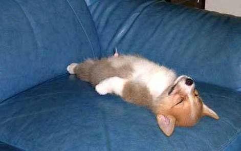 寝る前に良い夢見れそうな画像を貼るトピ